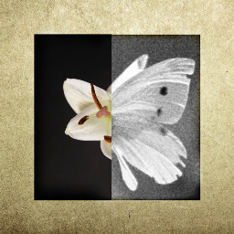 flower butterfly collage