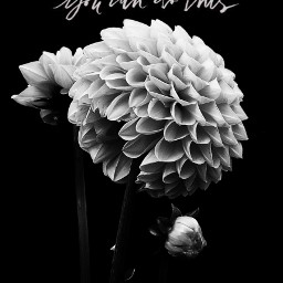 blackandwhite minimalism flower dahlia beautiful