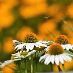 freetoedit photography naturephotography nofilter yellow