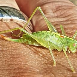 grasshopper nature green hand