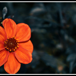 flowers nature photography orange