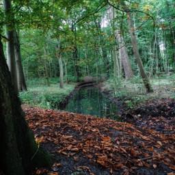trees park autumn reflection nature freetoedit