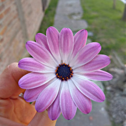 freetoedit flower pink primavera moments