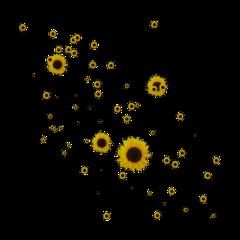 sunflower yellow jaune yellowaesthetic freetoedit