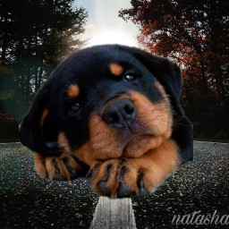 freetoedit madewithpicsart myedit puppy fxeffects