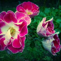 flower lomo nature