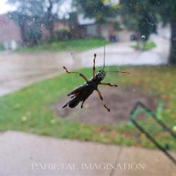freetoedit cricket window letmein raining