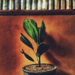 plant pot photooftheday