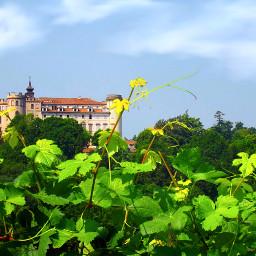 freetoedit nature landscape leaves vine pcleaves