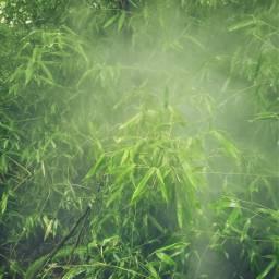 leaves bamboo fog mist green
