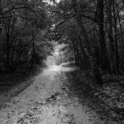 forestroad pcblacknwhite blacknwhite blackandwhite