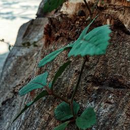 leaves photooftheday