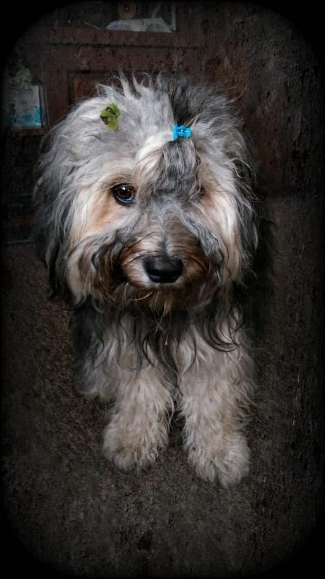 Hello Guys!🤗 #naturephotography #petsandanimals #dog #love #september2019 #portraitphotography #portrait #friend