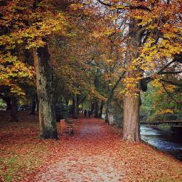 freetoedit autumn autumnvibes favoriteseason photography