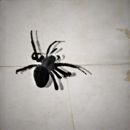 freetoedit spider holgaeffect blackandwhite papereffect
