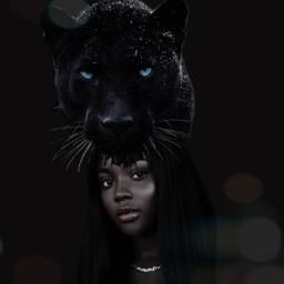 pantera panther blackpanther