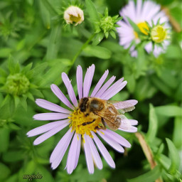 freetoedit bee flovers myphoto ape