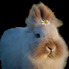 fluffy rabbit bunny freetoedit