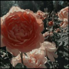 flower flowers background aestethic freetoedit