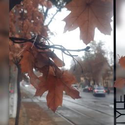 freetoedit autumnart autumnleaf autumncolors autumn🍁