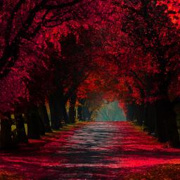freetoedit nature photography redness ghostfollowers