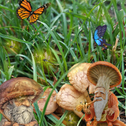 freetoedit mushroom🍄🍄🍄 wizards butterflies fireflies
