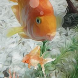 freetoedit fishs goldfish underwater srcunderwater