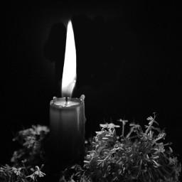 freetoedit myphotography lightpainting candle flowers pcblacknwhite