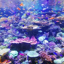 freetoedit aquarium poisson mer ocean srcunderwater