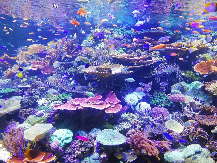 #freetoedit #aquarium #poisson #mer #ocean