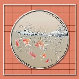 freetoedit peixes fishes aquario aquarium srcunderwater