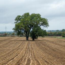 photography myphoto landscape tree photooftoday freetoedit