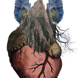 freetoedit heart wings fly idk