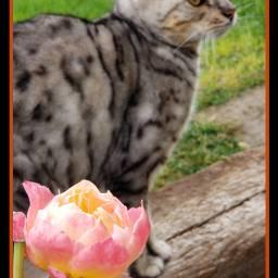 freetoedit cats catslover catsofpicsart catsphotography