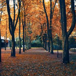 freetoedit autumn autumnvibes mood favoriteseason
