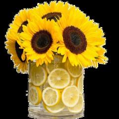sunflower yellow colour nature art freetoedit