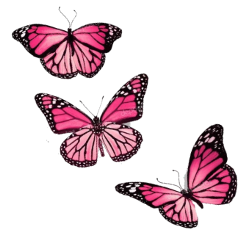 butterfly animal art stickers clipart freetoedit