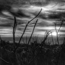 ghostfollowers dontfollowme nature natural photography