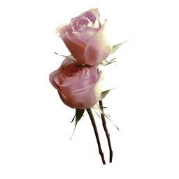 freetoedit cuorelucymy lucymy mialu rosa