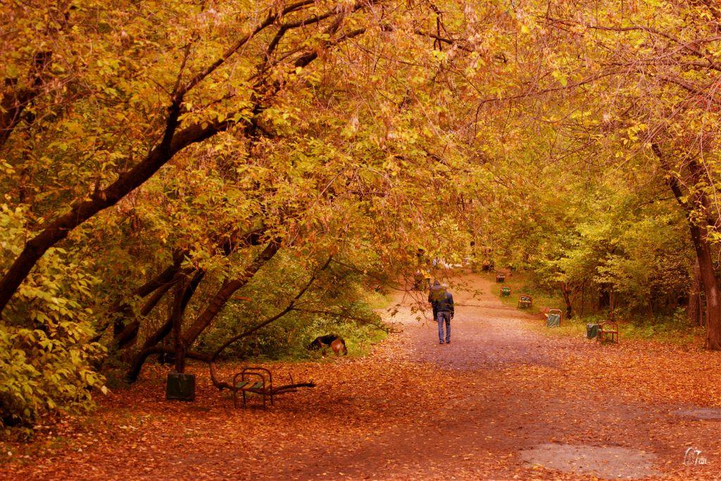 #autumn #park #mood #nature
