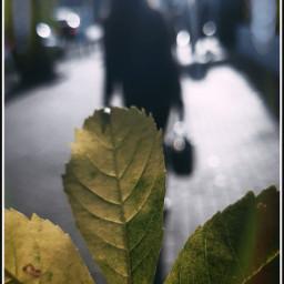 freetoedit october fallenleaves streetstyle streetphotography