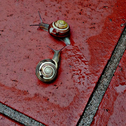 snails rainyday mypic