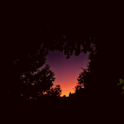 love trees dark flames mypic