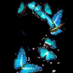 sticker butterfly blue glitch night freetoedit