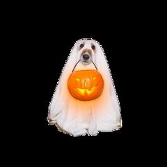 halloween halloweenparty october fall aesthetic freetoedit