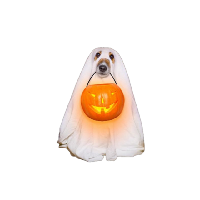 #halloween #halloweenparty #october #fall #aesthetic #dog #aesthetics #niche #nichememe #nichepng #png #filler #fillerpng