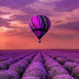 freetoedit violet hotairballoon lavanda flowers