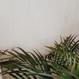 freetoedit minimalistic aesthetic