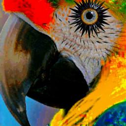 eyemakeup parrot macaw