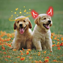 angel devil halloween dogs cute freetoedit